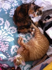 These crazy felines.